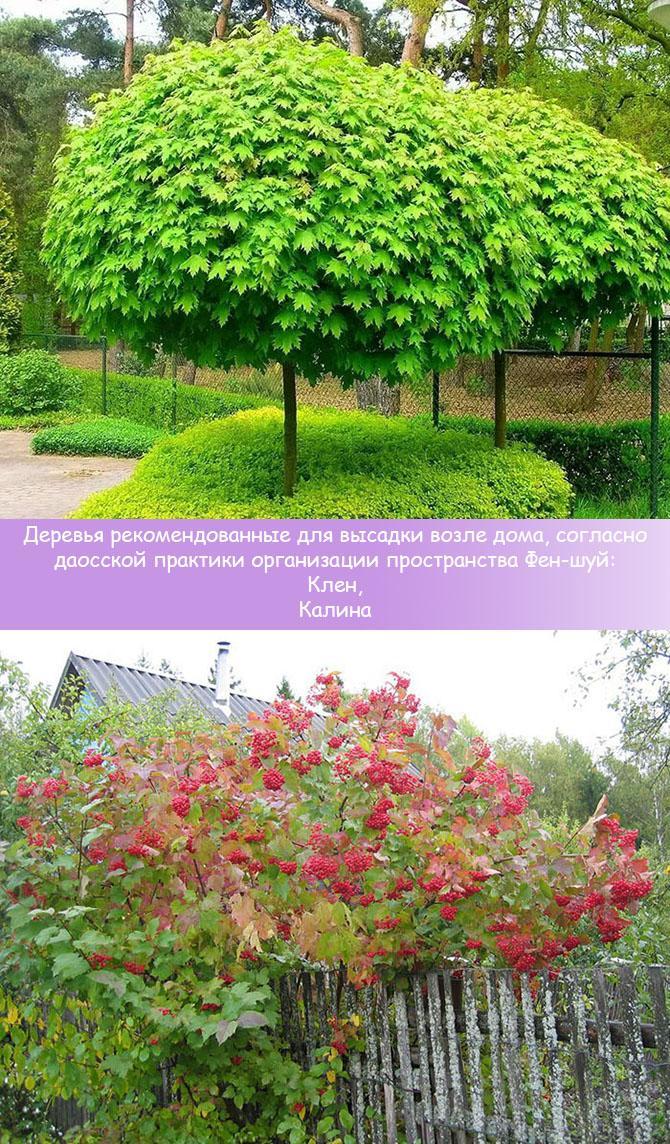 Деревья рекомендуемые для посадки у дома по фен-шуй