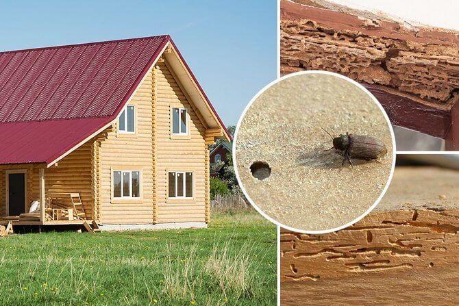 Средство от короеда в деревянном доме