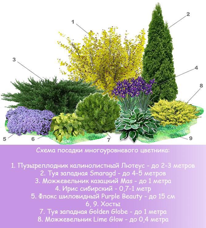 Схема посадки многоуровневого цветника