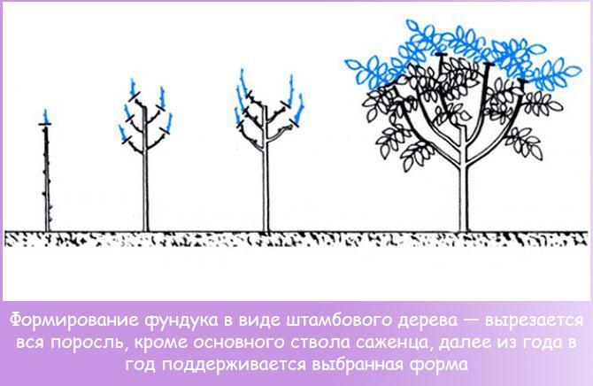 формирование фундука в дерево