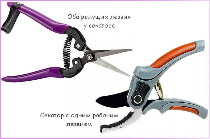 Секаторы с одним и двумя режущими ножами