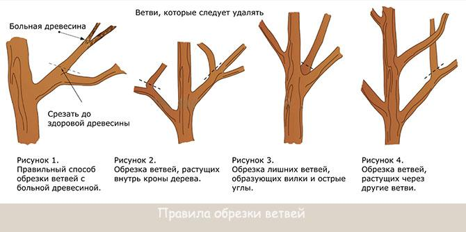 Санитарная обрезка ветвей
