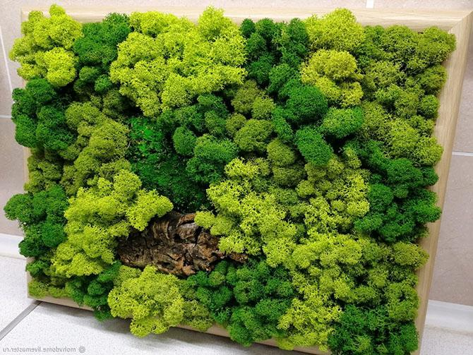 Декоративный мох ягель