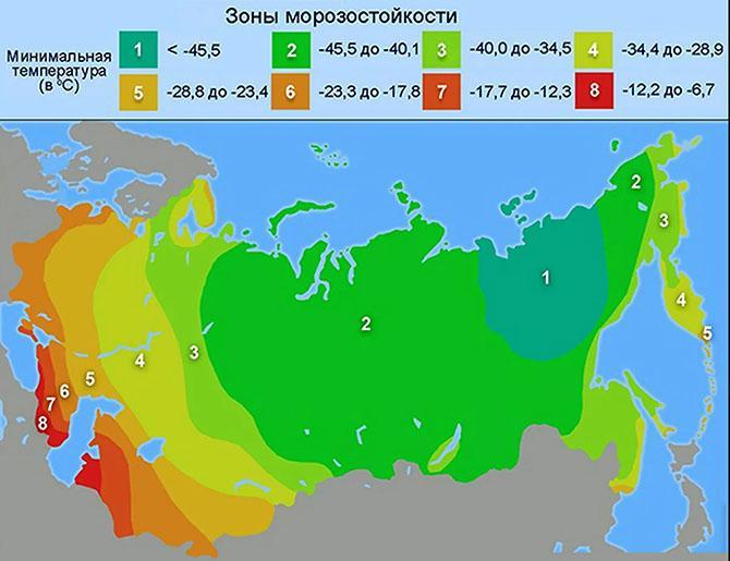 Зоны морозоустойчивости растений России