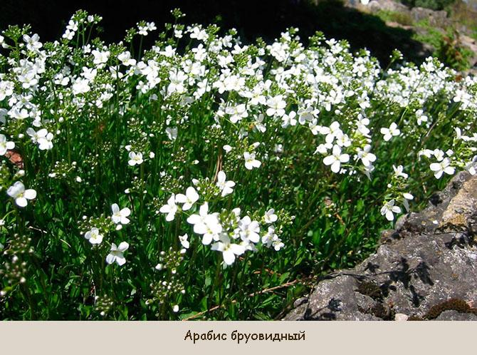 Неприхотливые растения вместо газона