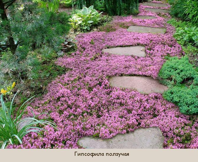 Солнцелюбивые растения для газона