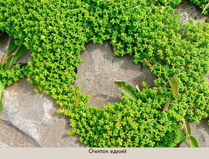 Что посадить вместо газона