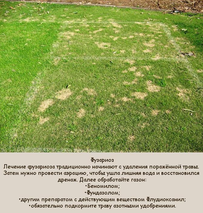 Почему газон сохнет местами