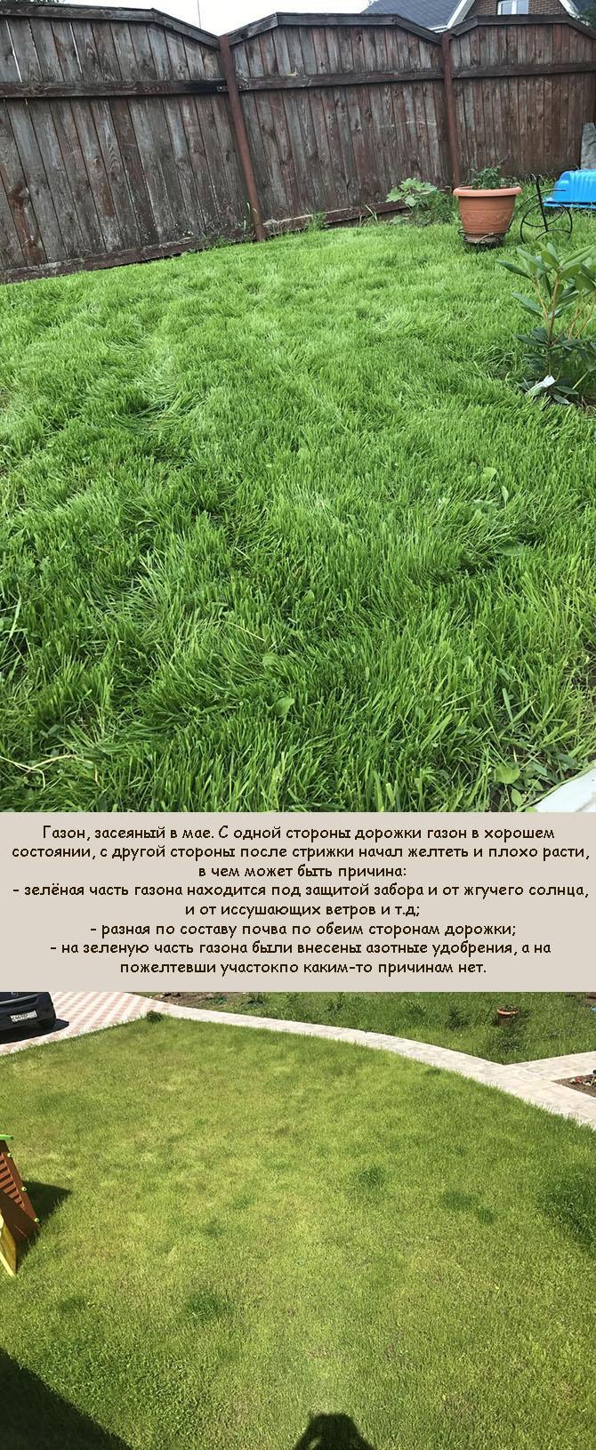 Почему газонная трава желтеет