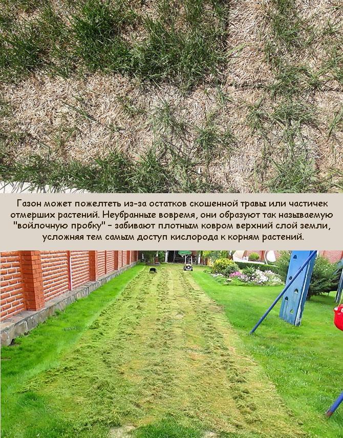 Желтеет и сохнет газонная трава после скашивания
