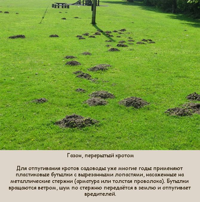 Повреждение газона кротами