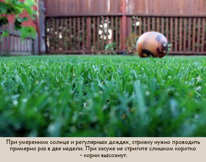 Почему газон желтеет после стрижки