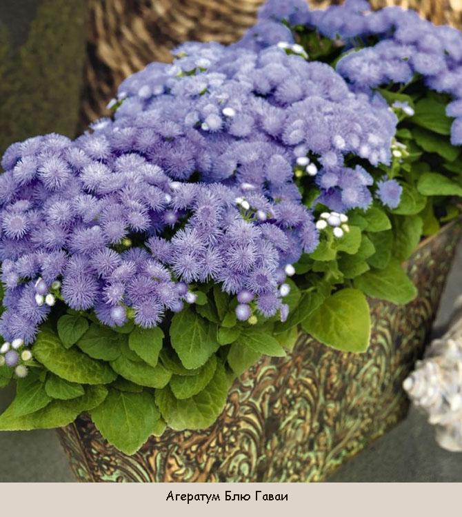 Цветы, цветущие в сентябре