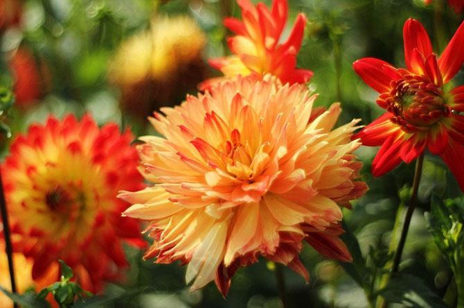 Какие цветы цветут в сентябре