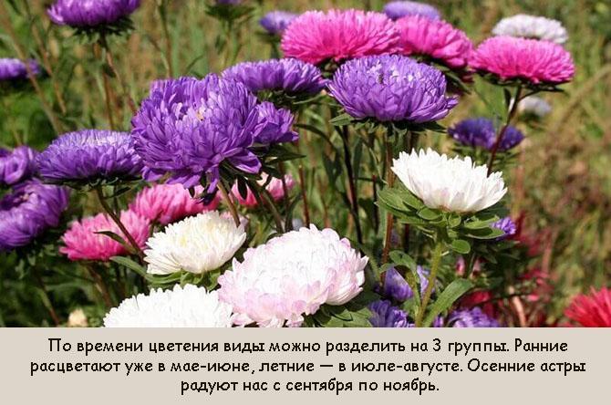 Какие цветы цветут с августа по сентябрь