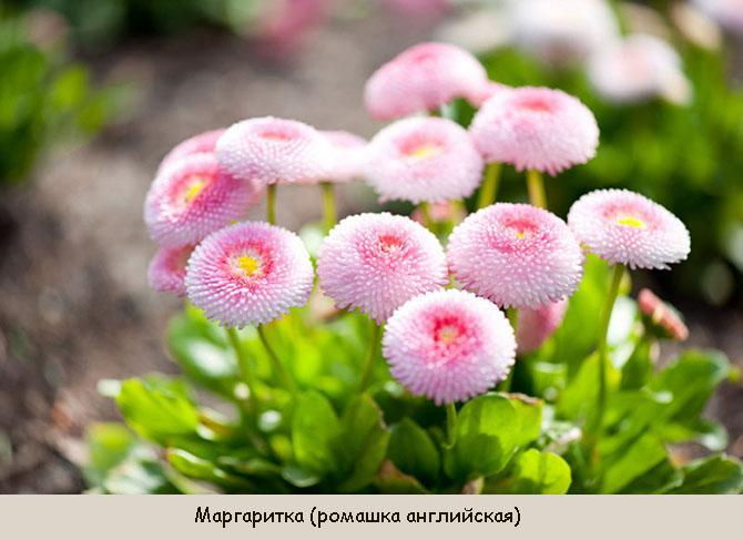 Цветы, зацветающие в сентябре